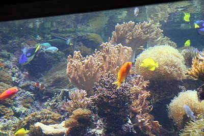 Fish - National Aquarium In Baltimore Md - 1212120 Poster