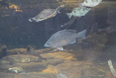 Fish - National Aquarium In Baltimore Md - 1212146 Poster by DC Photographer