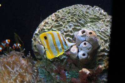 Fish - National Aquarium In Baltimore Md - 121224 Poster