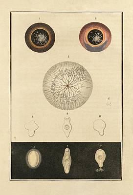 Fish Parasite Poster