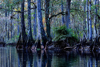 Fisheating Creek 04 Poster by Carol Kay