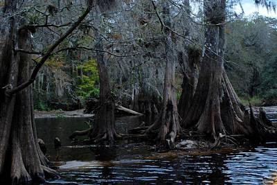 Fisheating Creek 22 Poster by Carol Kay