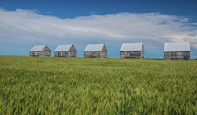 Five Granaries On Wheat Field, Alberta Poster by Panoramic Images