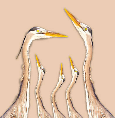 Five Herons Poster by Betsy Knapp