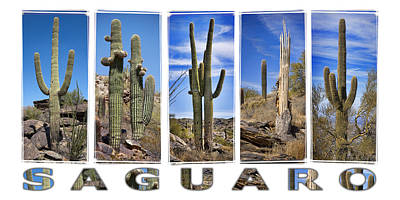 Five Saguaros Poster by Kelley King