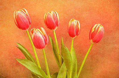 Five Tulips Poster