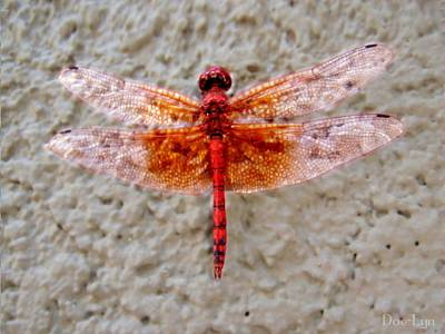 Poster featuring the photograph Flame Dragonfly  by Doe-Lyn