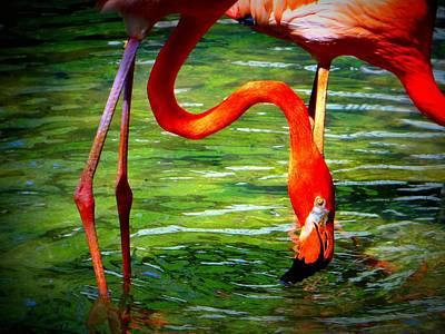 Flamingo Poster by David Mckinney