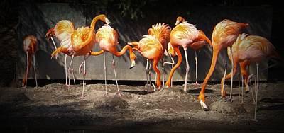 Flamingo Hangout Poster