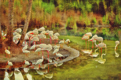Flamingo Pond Poster by Kathy Jennings