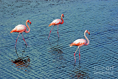 Flamingoes In The Galapagos Painting Poster by Al Bourassa