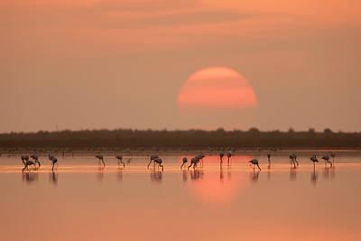 Flamingos At Sunrise Poster
