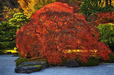 Flat Garden Maple Poster