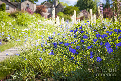 Flax Flowers In Summer Garden Poster by Elena Elisseeva