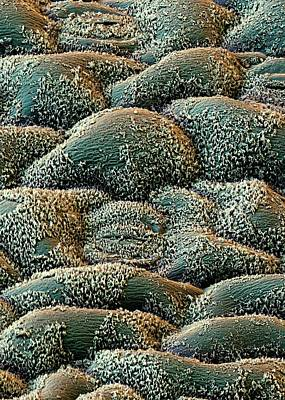 Flax Leaf Stomata Poster by Stefan Diller