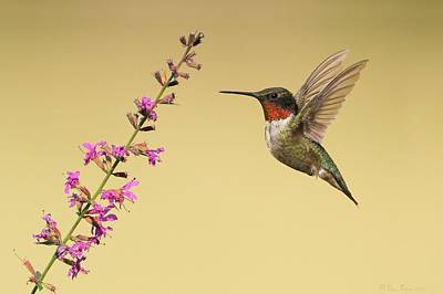 Poster featuring the photograph Flight Of A Hummingbird by Daniel Behm