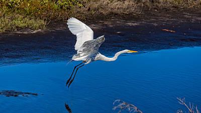 Flight Of The Egret Poster