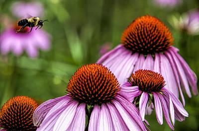 Flight Of The Honey Bee Poster