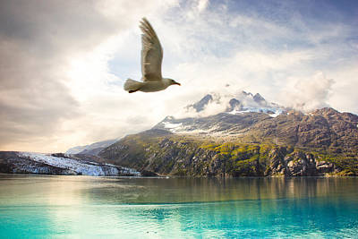Poster featuring the photograph Flight Over Glacier Bay by Janis Knight