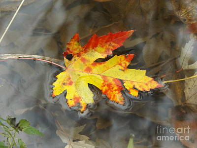 Floating Autumn Leaf Poster