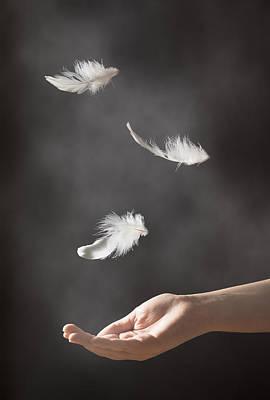 Floating Feathers Poster by Amanda Elwell