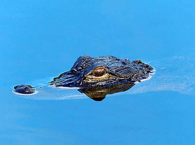 Floating Gator Eye Poster