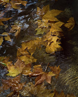 Poster featuring the photograph Floating Leaves - Fall In Rome by Michael Flood
