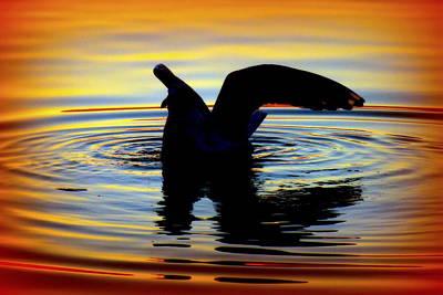 Floating Wings Poster by Karen Wiles