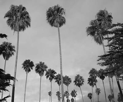 Flock Of Palm Trees Poster