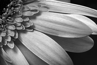 Poster featuring the photograph Floral Detail by Dawn Currie