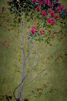 Poster featuring the photograph Floral Interlace by Linde Townsend
