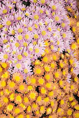 Floral Overflow - A Vivacious Display Of Multicolour Autumn Mums Poster by Georgia Mizuleva