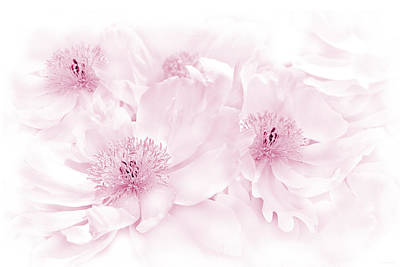 Floral Peonies In Pink Poster by Jennie Marie Schell