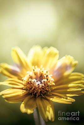 Floral Sunlight Poster