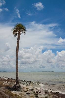 Florida Bay 6943 Poster