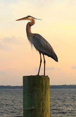 Florida Crane Poster