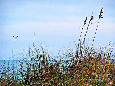 Poster featuring the photograph Florida Dunes by Melissa Sherbon