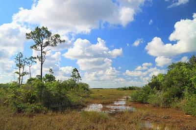 Florida Everglades Poster by Rudy Umans