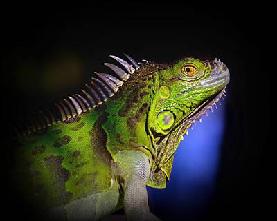 Florida Iguana Poster