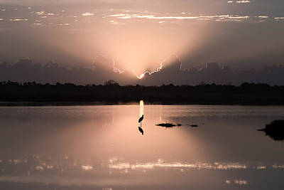 Florida Morning Photograph - A Blue Heron Sunrise- Version Two Poster