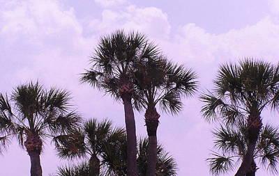 Florida Palms Poster by John Wartman