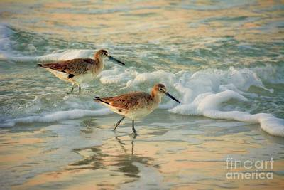 Florida Sandpiper Dawn Poster by Henry Kowalski