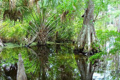 Florida Wetland Poster