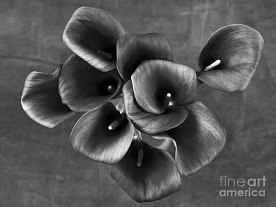 Flower #248 Poster
