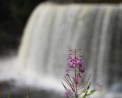 Flower At Tahquamenon Falls Poster by Dan Sproul