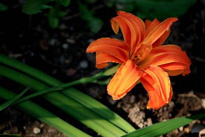 Flower In Backyard Poster