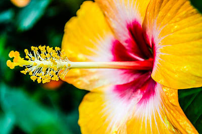 Flower Macro 2 Poster by Alan Marlowe