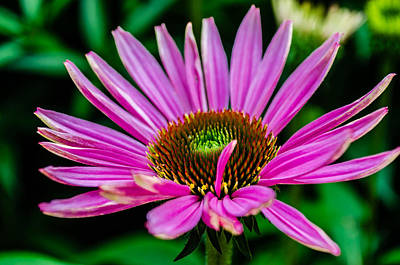Flower Macro 3 Poster by Alan Marlowe
