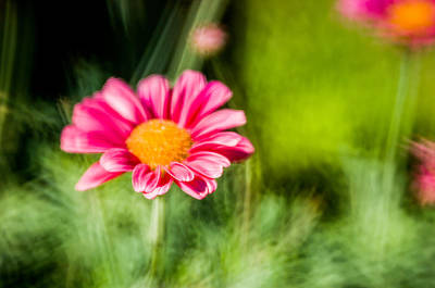 Flower Poster by Mirra Photography