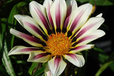 Flower Number 2 Poster
